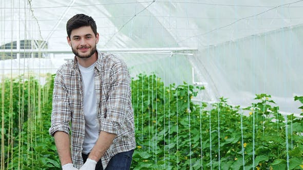 Guy Worker In A Greenhouse Smiling At The Camera