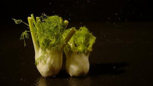 Water drizzling on fennel, Ultra Slow Motion