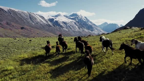 Thumbnail for Wild Horses Running. Herd of Horses Running on the Steppes in the Background Mountain. Sunset
