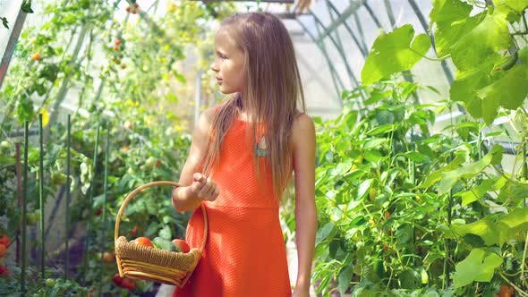 Thumbnail for Adorable Little Girl Harvesting Cucumbers and Tomatoes in Greenhouse.