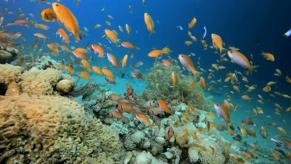 Cover Image for Underwater Tropical Colorful Reef