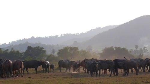 Animal Bull Vieh Fütterung in einem ländlichen