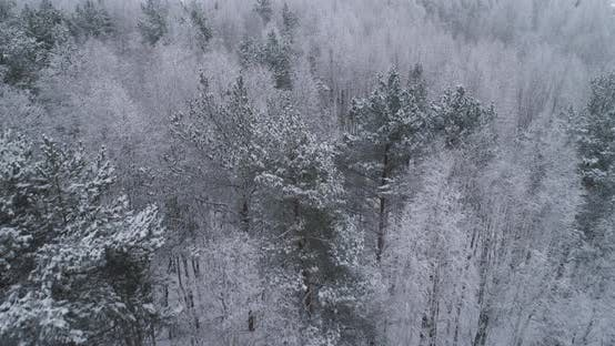 Thumbnail for Winter Landscape with Forest