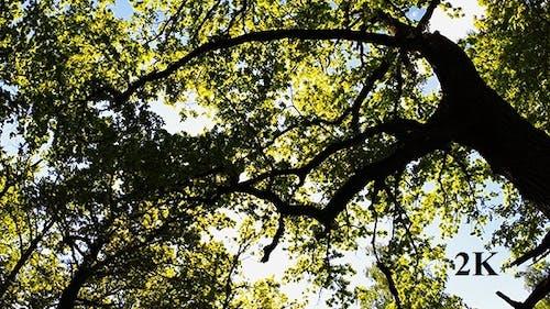 SunThrough the Trees