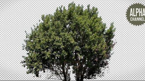 Baum mit Alphakanal
