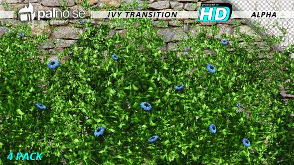 Thumbnail for Ivy & Flowers (4-Pack)