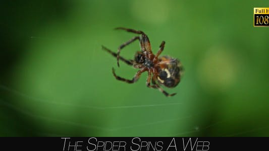 Thumbnail for The Spider Spins A Web