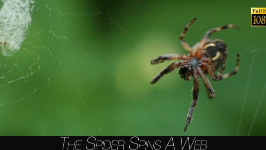 Cover Image for The Spider Spins A Web 2