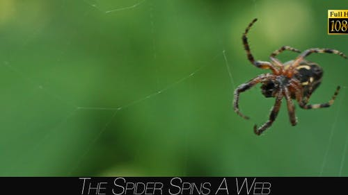 The Spider Spins A Web 3