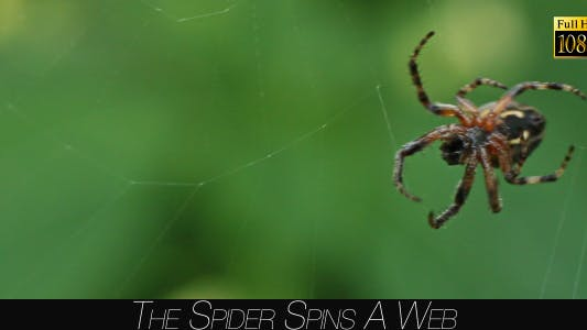 Cover Image for The Spider Spins A Web 3