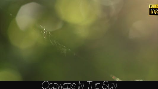Thumbnail for Cobwebs In The Sun