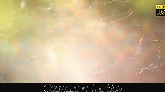 Cover Image for Cobwebs In The Sun 2