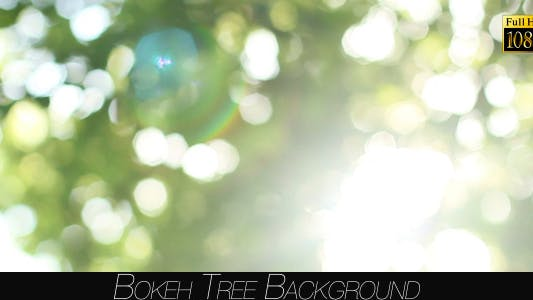 Cover Image for Bokeh Tree Background 22
