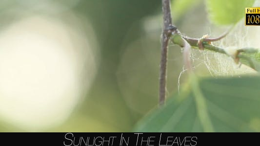 Cover Image for Sunlight In The Leaves 41
