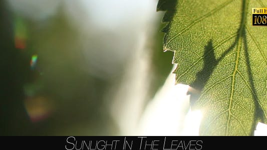 Cover Image for Sunlight In The Leaves 46