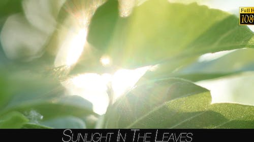 Sunlight In The Leaves 49