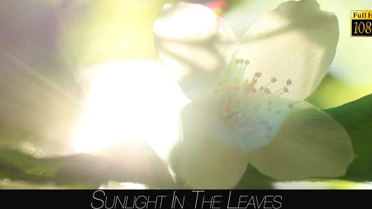 Cover Image for Sunlight In The Leaves 53