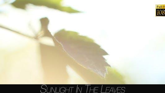 Thumbnail for Sunlight In The Leaves 55