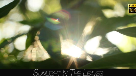 Cover Image for Sunlight In The Leaves 56