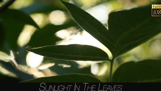 Cover Image for Sunlight In The Leaves 57