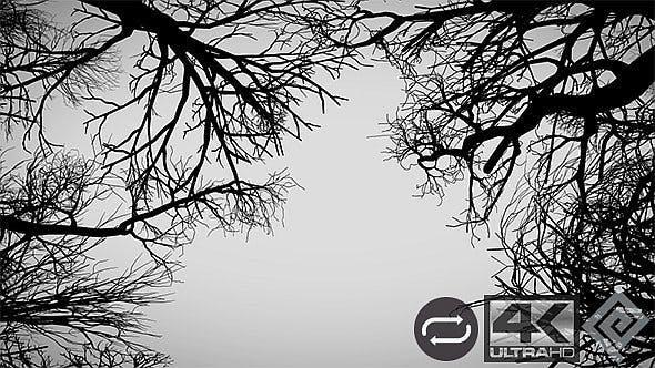 Kamera bewegt sich unter toten Bäumen