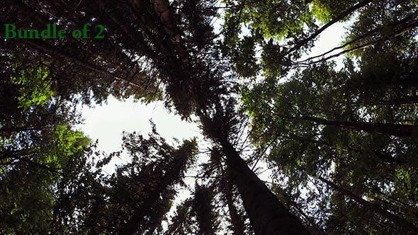 Thumbnail for Sunbeams Through Trees