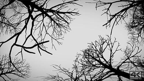 Kamera bewegt sich unter toten Bäumen - Horizontal