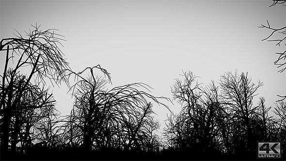 Toter Wald - Schwarz und Weiß