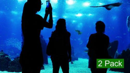 People at the Oceanarium (2-Pack)