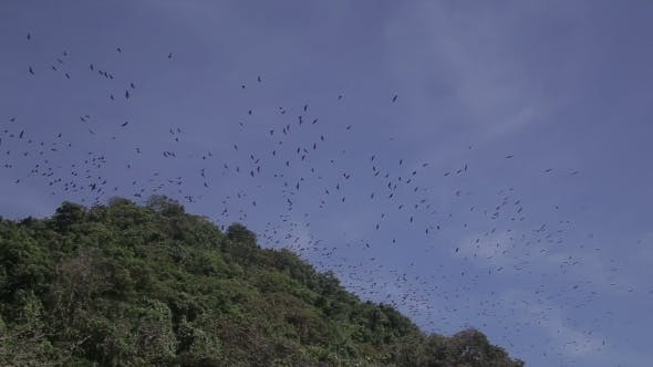 Thumbnail for Flying Foxes On Sland Of Boracay