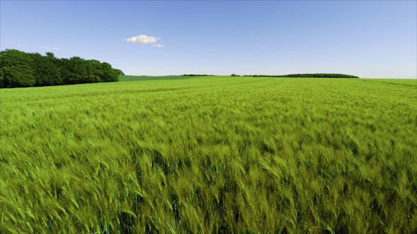 Cover Image for Aerial Over Young Wheat