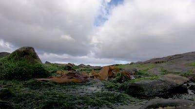 Time Lapse of Algae and Rocks at the Irish Coast