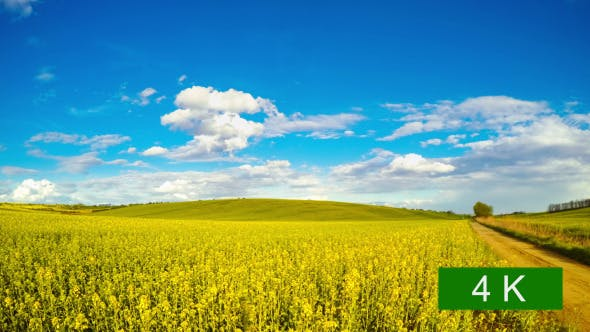 Thumbnail for Clouds over the Rapeseed Fields