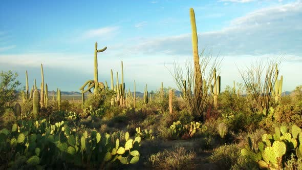 Thumbnail for Saguaro National Park 1