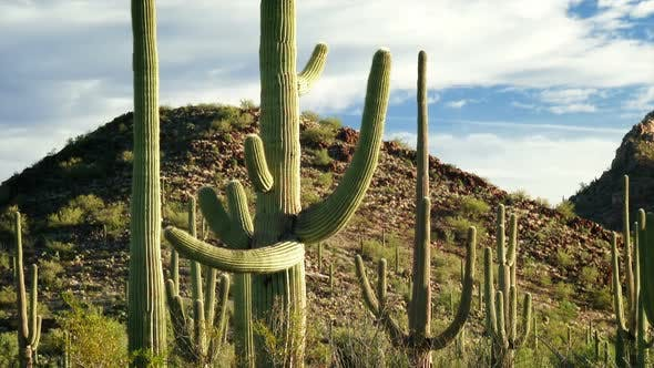 Thumbnail for Saguaro National Park 2