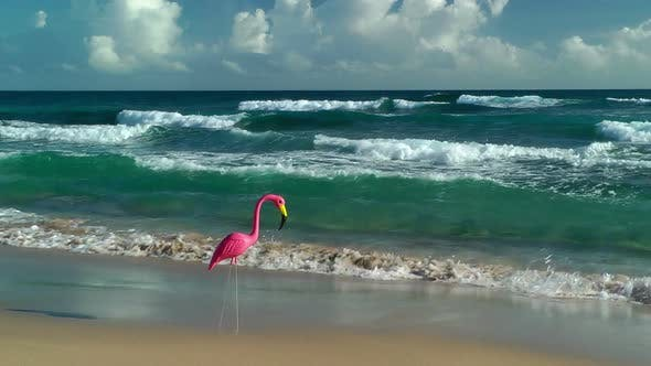 Thumbnail for Plastic Flamingo On Isabel Beach