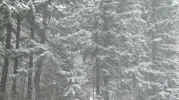 Thumbnail for Heavy Snowfall In A Forest