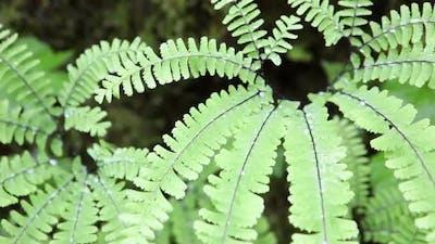 Ferns 2