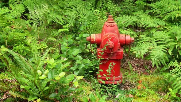 Thumbnail for Red Fire Hydrant In Nature