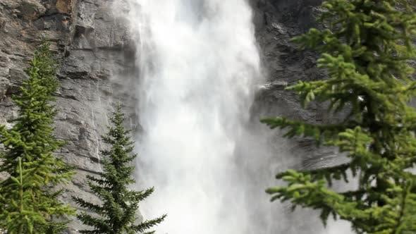 Thumbnail for Trees And Takakkaw Falls