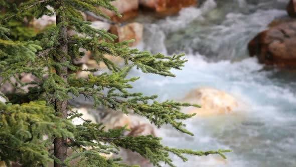 Thumbnail for Tokkum Creek And Pine Tree