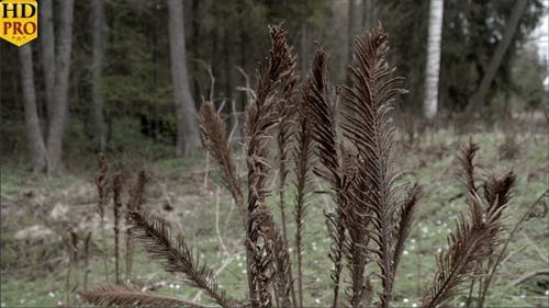 Set of Withered Ferns