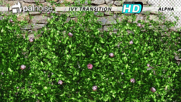 Thumbnail for Ivy Growing & Pink Flowers