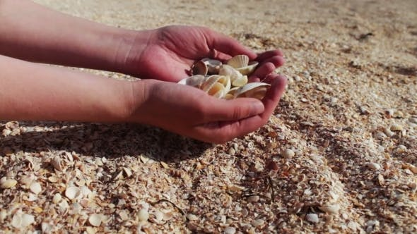 Thumbnail for A Man's Hand Takes Seashells, Sand On The Beach