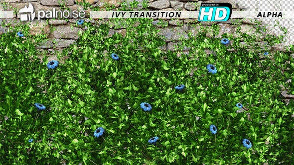 Thumbnail for Vegetation Grow and Blue Flowers