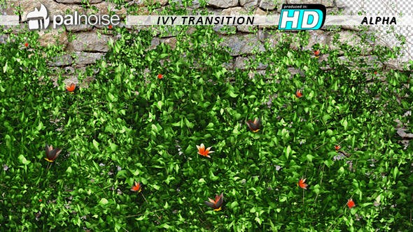 Thumbnail for Garden Ivy Growing Orange Flowers