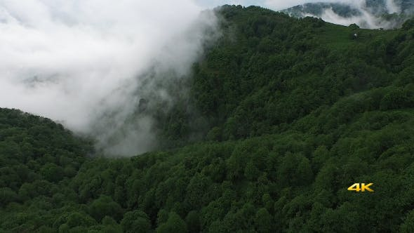 Cover Image for Aerial Flying Over Above Forest on Clouds Fog 1