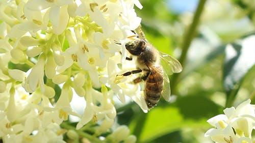 Bee Extracts Pollen