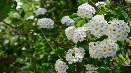Thumbnail for Flowers 9