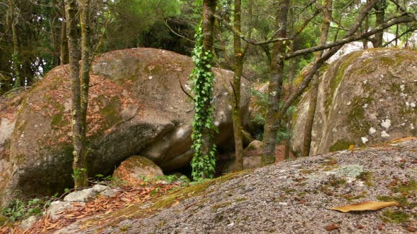 Thumbnail for Wild Beech Forest and Huge Boulders